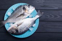 在板材的未加工的dorado鱼有冰的 免版税图库摄影