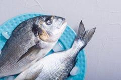 在板材的未加工的dorado鱼有冰的 免版税库存照片
