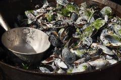 在板材的煮熟的淡菜 库存照片