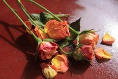 在板材的玫瑰 图库摄影