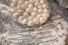 在板材的自创饺子 图库摄影