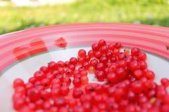 在板材的莓果 免版税图库摄影