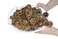 在板材的蜗牛 免版税库存照片