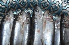 在板材的西鲱鱼 免版税图库摄影