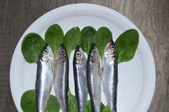 在板材的西鲱鱼 库存图片