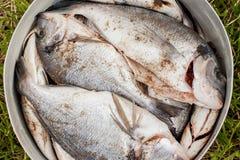 在板材的鱼 免版税库存照片