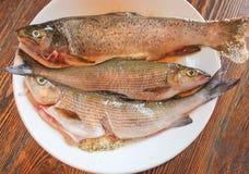 在板材的鲜鱼,烹调为油煎 新鲜的野生鳟鱼和 免版税库存图片