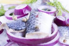 在板材的鲱鱼 免版税图库摄影