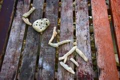 在板条的尸体珊瑚字词爱 免版税库存照片