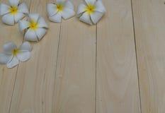 在板条的赤素馨花花 图库摄影