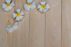 在板条的赤素馨花花 免版税库存照片