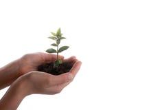在极少数土壤的树幼木 免版税库存图片