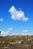 在林业以后 免版税库存照片
