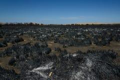 在林区大火以后的风景 图库摄影