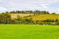 在林荫道路路线的农田从Castlebar向韦斯特波特 图库摄影
