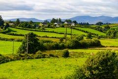 在林荫道路路线的农田从Castlebar向韦斯特波特 免版税库存图片