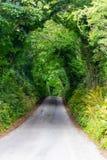 在林荫道路路线的绿色隧道从Castlebar向韦斯特波特 免版税库存照片