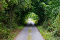 在林荫道路路线的绿色隧道从Castlebar向韦斯特波特 免版税库存图片