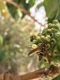 在果子的黄蜂 免版税库存照片