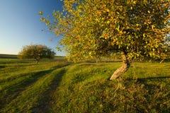 在果树园的秋天日落 库存照片