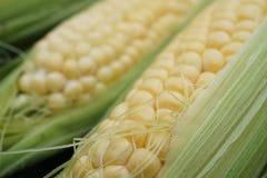 在果皮的年轻玉米 免版税库存图片