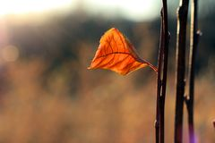 在枝杈的一片叶子 免版税图库摄影