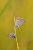在枝杈的两只蝴蝶 库存照片