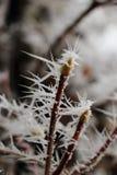 在枝杈的冰针 图库摄影