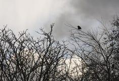 在枝杈的孤独的鸟 库存照片