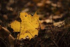 在枝杈的秋天叶子 库存照片