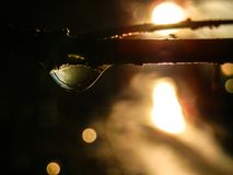 在枝杈的美好的水下落射击了反对日落 库存图片