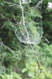 在枝杈的蜘蛛网 免版税库存图片