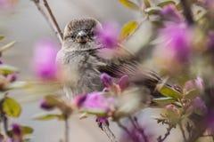 在枝杈的鸟 免版税库存图片