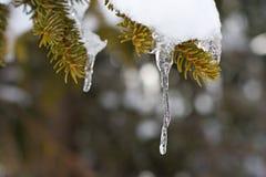 在枝杈,奥地利的冰柱 免版税图库摄影