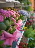 在架子的明亮的五颜六色的美丽的花 库存照片
