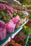 在架子的明亮的五颜六色的花 免版税库存图片