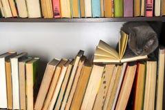 在架子的逗人喜爱的l猫与在轻的背景的书 读旧书的猫 图库摄影