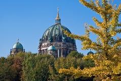 在柏林大教堂结构树v1之后 库存图片