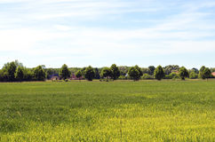 在柏林附近的草甸 免版税图库摄影