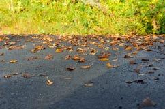 在柏油碎石地面的秋天叶子 库存图片