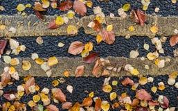 在柏油碎石地面街道上的秋叶 免版税库存图片