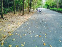 在柏油路停放的自行车在公园 免版税库存照片