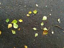 在柏油路的叶子 图库摄影