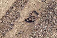 在柏油路的布朗蛇 免版税库存图片