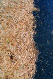 在柏油路的干叶子 免版税库存图片