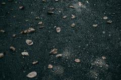 在柏油路的干燥叶子 库存图片