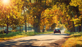 在柏油路的汽车在秋天 库存照片