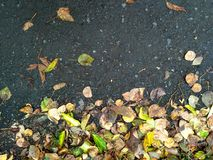 在柏油路的秋天叶子 免版税库存图片