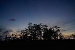 在柏沼泽的月亮 库存图片