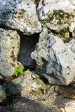 在某一大岩石动物隐藏处之间的空的孔 库存图片
